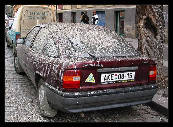 Mondays funny pics Bad_car_day