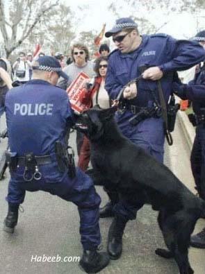 Vicevi o policajcima Bad_dog_day