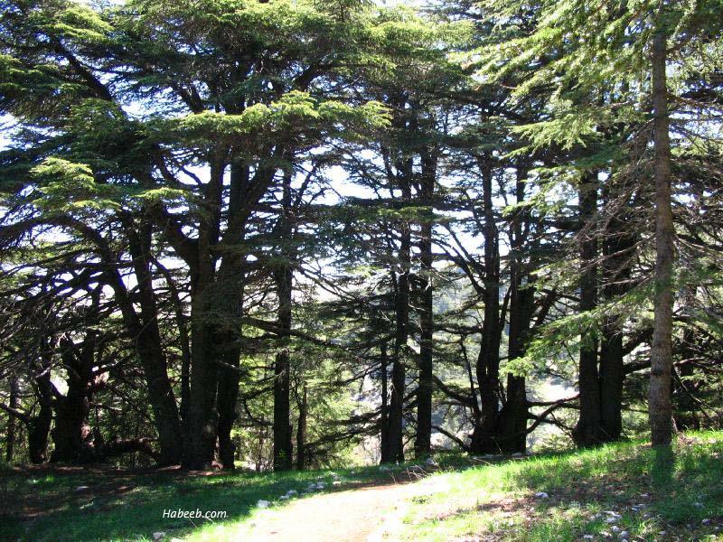 السياحه لبنان مناطق لبنان اروع الامكان لبنان 2010