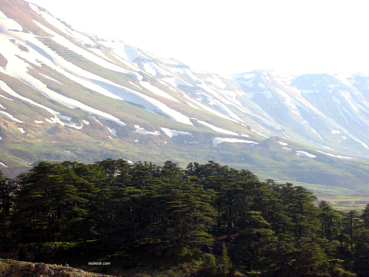Lebanon Photos Cedars Of The Lord