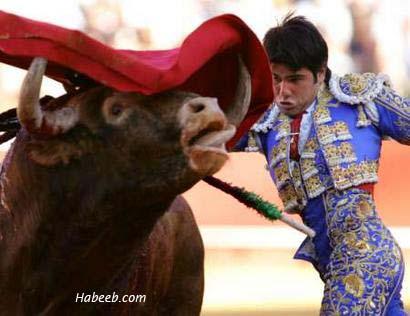 http://www.habeeb.com/images/matador.bullfight.05.jpg